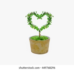dwarf in pot a heart-shaped  perm. isolated on white background