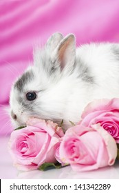 Dwarf rabbit with pink roses