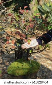 Dwarf tree with fruit on hand