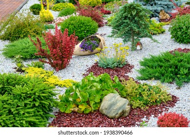 Dwarf trees and shrubs in the flowerbed. Pebble gravel. Landscaping. Bright lush composition.
