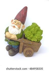 Dwarf with wheelbarrow and broccoli on a white background