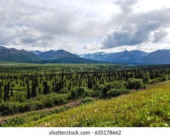 Dwarfed evergreens seen from Tok Cutoff north of Valdez, Alaska
