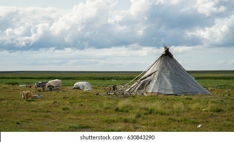 Dwelling of the Nenets - the people of the far North, called chum. The Yamal Peninsula. Summer time.