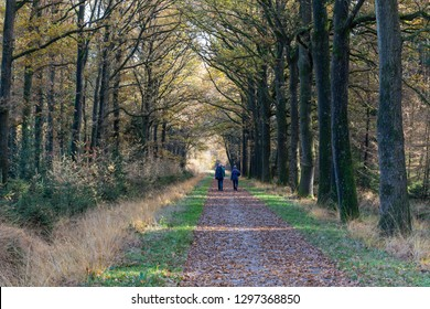 Dwingelderveld, Netherlands - November 11, 2018: Hiking path with two hikers in autumn in National Park Dwingelderveld in the province of Drenthe, The Netherlands.