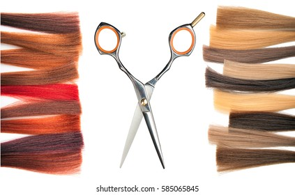 Dyed locks of hair and scissors. Isolated.