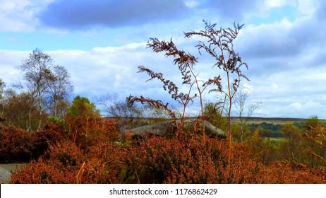 Dying Bracken - Autumn in the Peak District