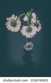 Dying flowers in a vase