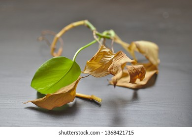 Dying Potted Plant Images, Stock Photos & Vectors | Shutterstock