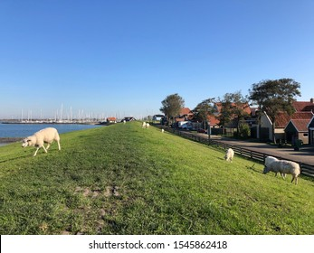 Dyke with sheeps around Hindeloopen during autumn in Friesland, The Netherlands
