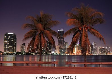 The dynamic Miami skyline at night and a couple of palm trees.