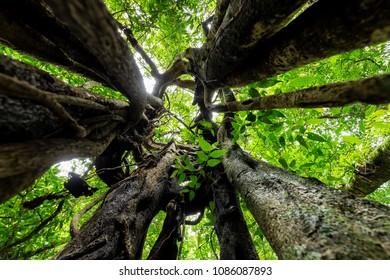 Dynamic wide angle shot inside the bark of a ficus tree, Munduk forest, Bali, IndonesiaI