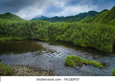 The Dzukou Valley is a valley located at the border of the states of Nagaland and Manipur. This valley is well known for its natural environment, seasonal flowers and flora and fauna.