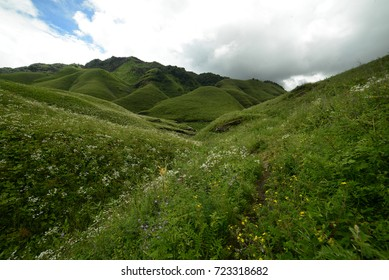 Dzukou Valley, Nagaland, India