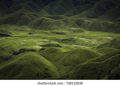 DZUKOU VALLEY, NAGALAND, INDIA:- A morning view of Dzukou Valley from base camp .