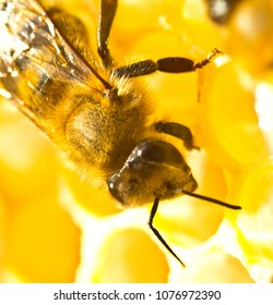 Each bee does some work. Now bees take nectar from honeycombs to transform it into honey.