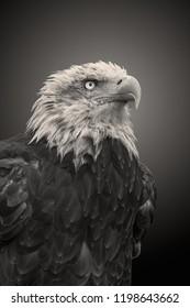 Eagle Aguila Ave