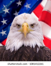 Eagle with American flag background