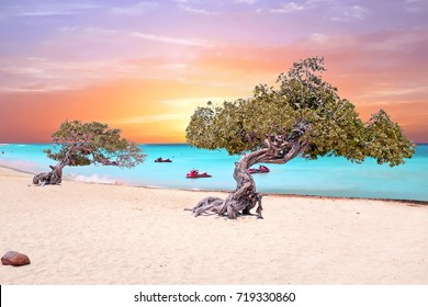 Eagle beach on Aruba island in the Caribbean Sea at sunset