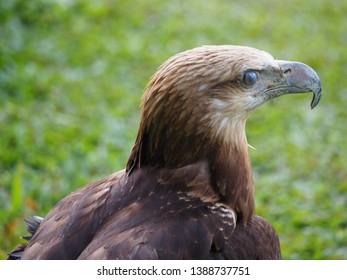 101+ Foto Gambar Burung Elang Putih  Terbaru Free