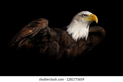 Eagle On Black Background Hd Stock Images Shutterstock
