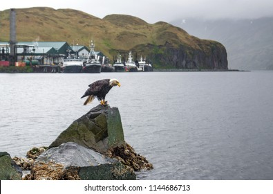 Eagle and Boats by the Sea in Alaska