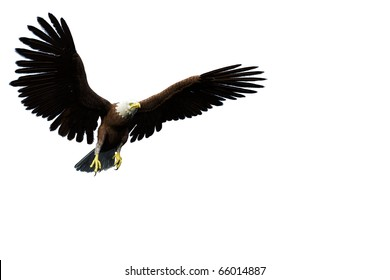 eagle casual flight white background