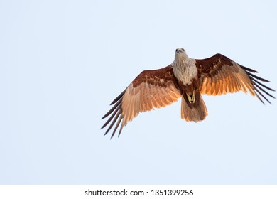 The eagle dominates the sky as is his birthright