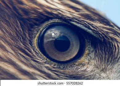 eagle eye close-up, macro photo, vintage style color tone