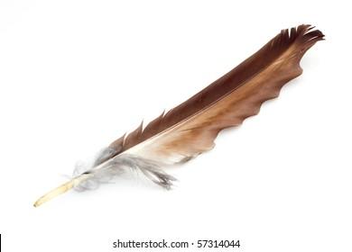 Eagle feather