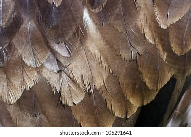 eagle feather detail on the back