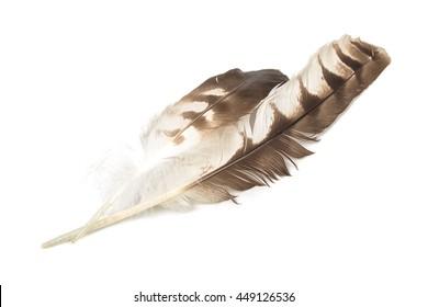 Eagle feather isolated on white background