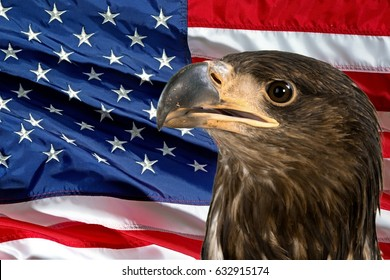 Eagle and flag usa.