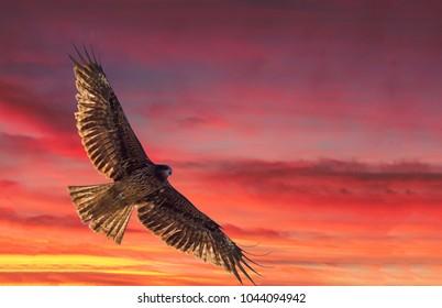 EAGLE  in  FLIGHT. Japan  symbol.  Over  KATSURA  River KYOTO