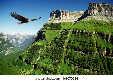eagle flying above a canyon