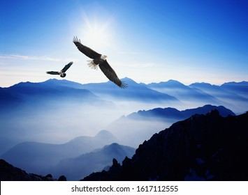 An eagle flying above the mountains