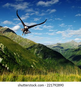eagle flying above the mountains
