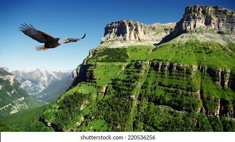 eagle flying above Ordessa valley, Aragon, Spain