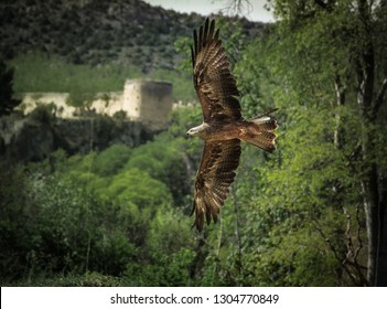 eagle flying with castle