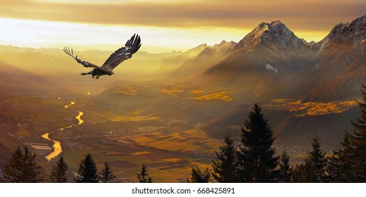 Eagle flying, Golden eagle