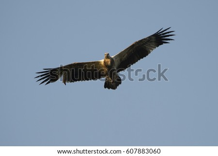 Eagle Flying Komodo National Park Indonesia Stock Photo (Edit Now ... 65b3b9e0a3