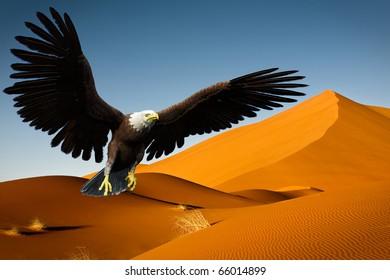 eagle flying on desert