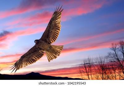 EAGLE  flying over  KATSURA  River KYOTO