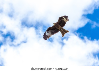 Eagle flying sky