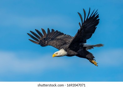 eagle flying in the sky during daytime