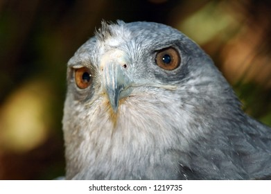 Eagle Glance