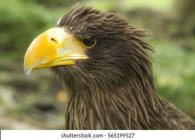 Eagle head on nature
