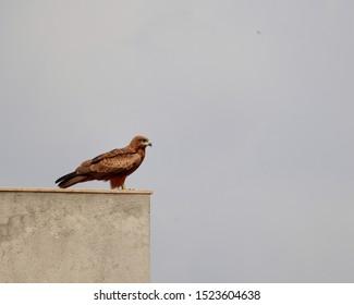 Eagle - Living on the edge