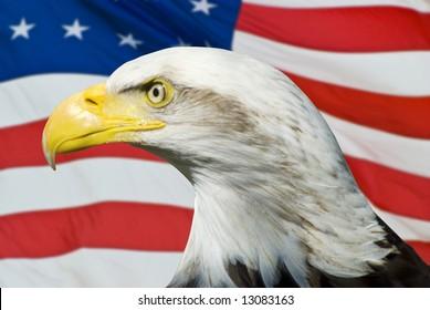 Eagle on an American Flag