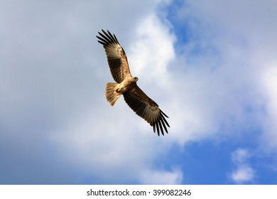 Eagle on a blue sky