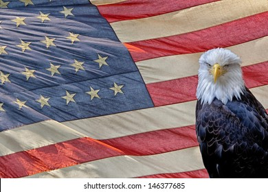 eagle on star and stripes american US flag